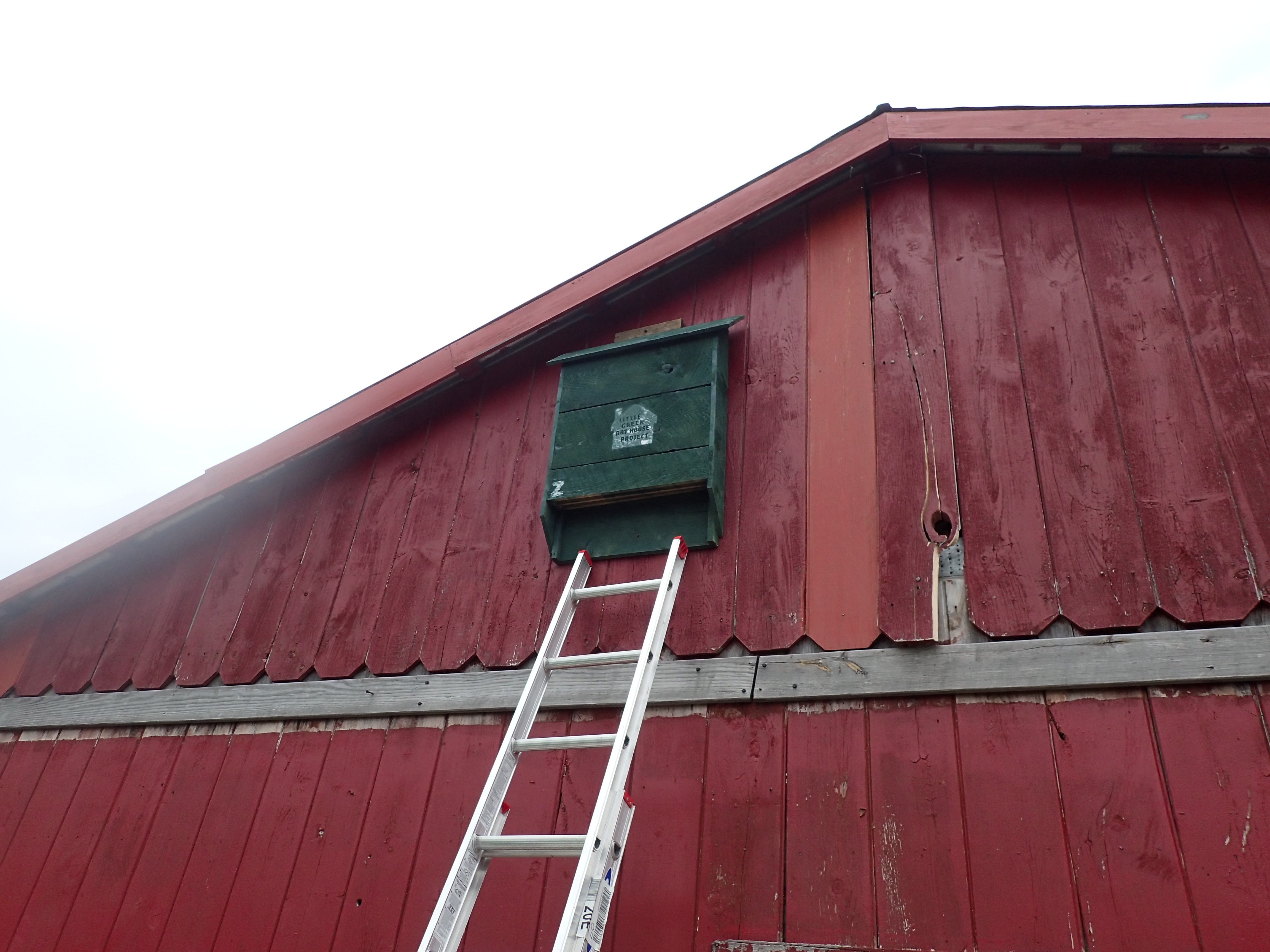 Your Existing Bat House Does Not Need To Be Little Or Green Part Of The Project We Also Have Plans Build Own Install A You